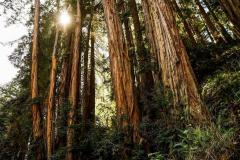 Treesjoint